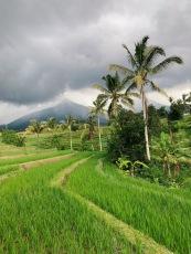 bali rizière palmier volcan nuages