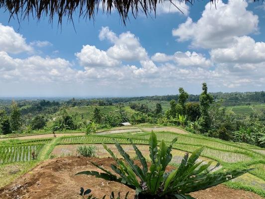 Bali rizière