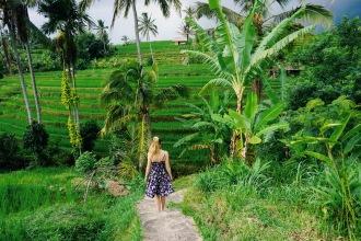 Bali rizière vert palmier