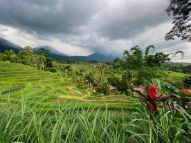 Bali rizière volcan
