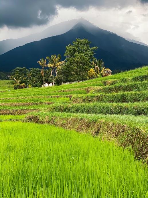 Bali rizières volcan vert
